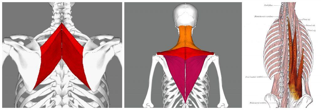 kifoz kamburluk durus bozuklugu zayif kaslar rhomboid eroctor spinea trapez alt ve orta