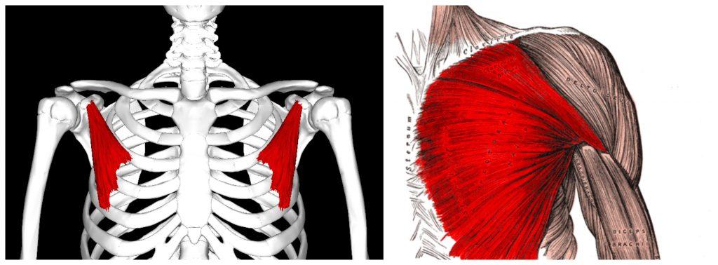 kifoz kamburluk duruş bozukluğu kısalmış göğüs kasları