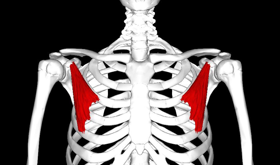 omzun öne düşmesi postur bozukluğu